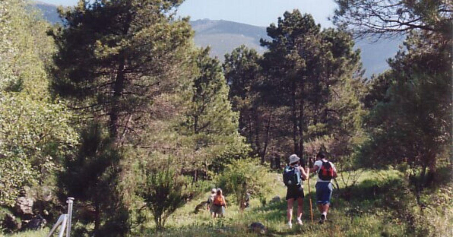 Bosques de la Adrada. Ávila. Castilla y León.