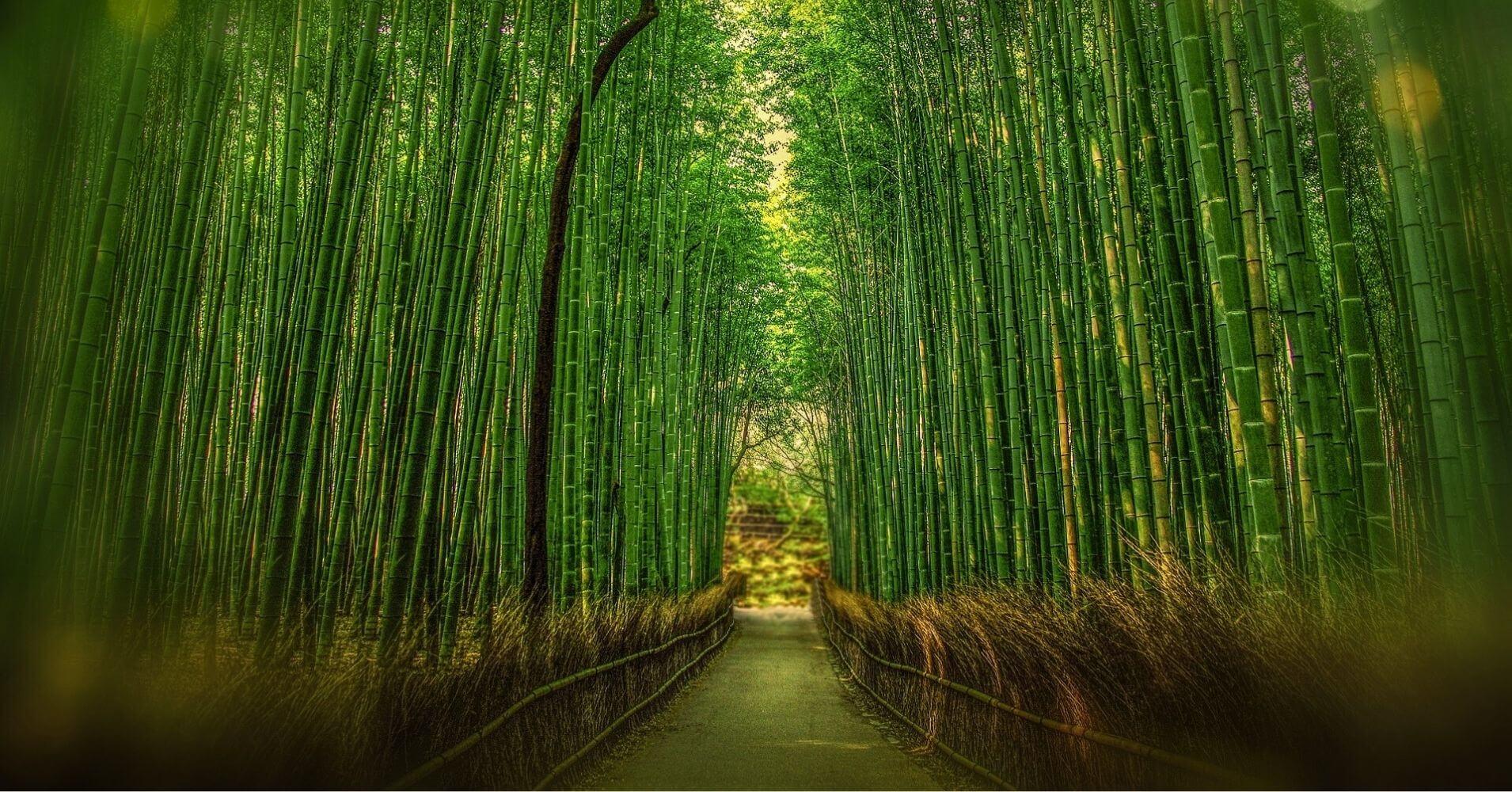 Bosque de Bambú de Arashiyama. Kyoto. Viajar a Japón.