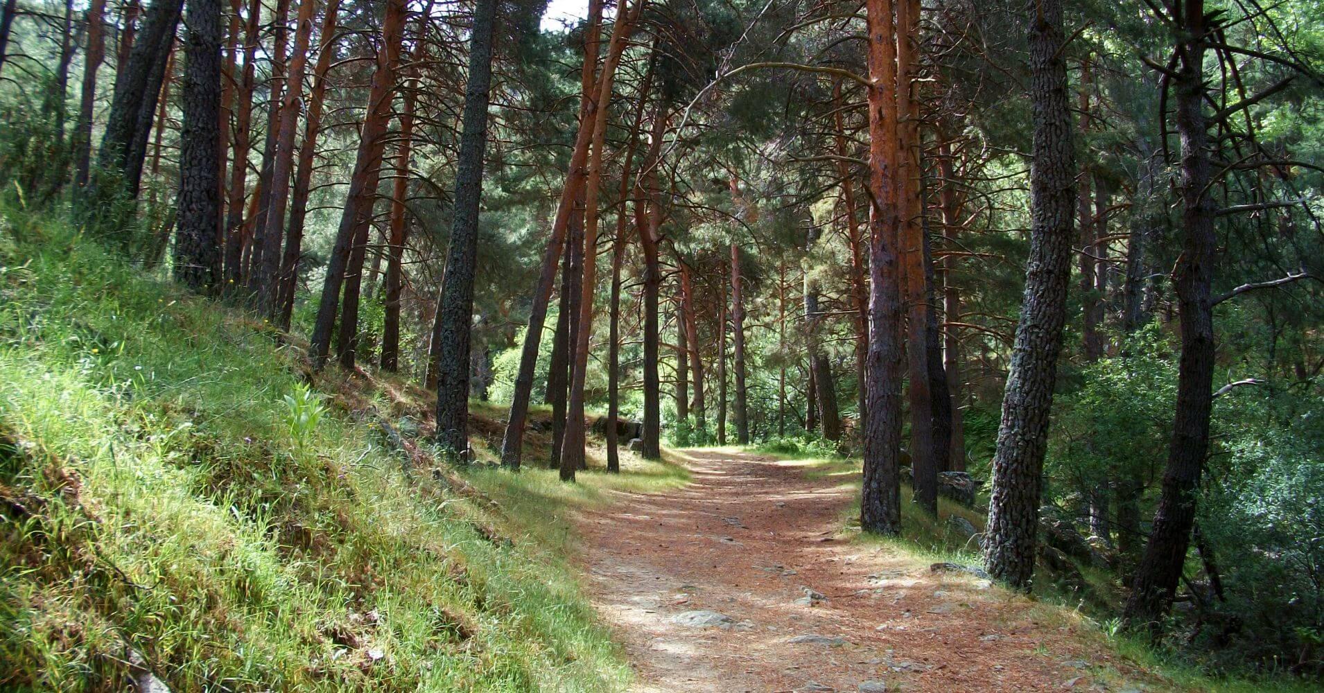 Bosques de la Sierra de Guadarrama. Peguerinos. Ávila. Santa María de la Alameda. Madrid.