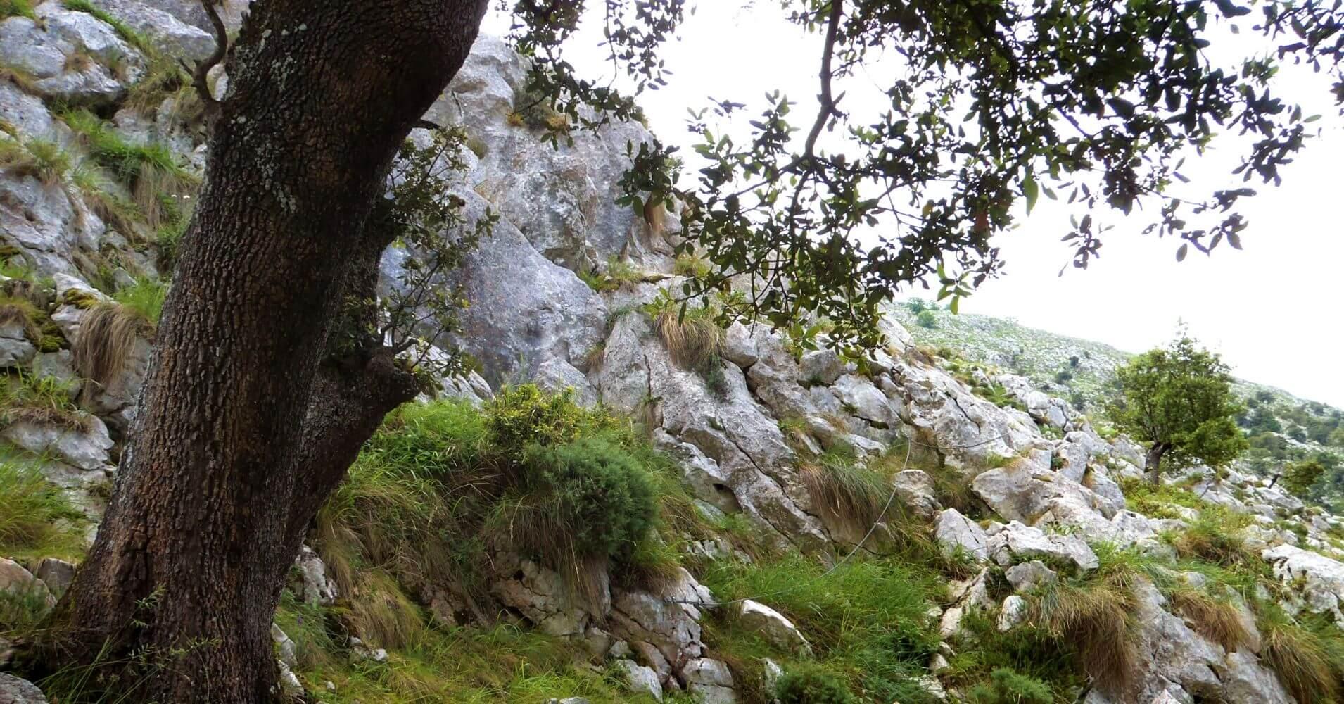 Descenso de la Vía. Picos de Europa, Cantabria.
