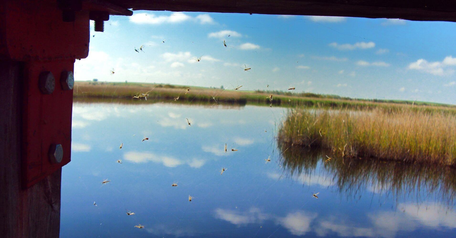 Observatorio de aves del Parque Nacional de las Tablas de Daimiel. Ciudad Real, Castilla la Mancha.