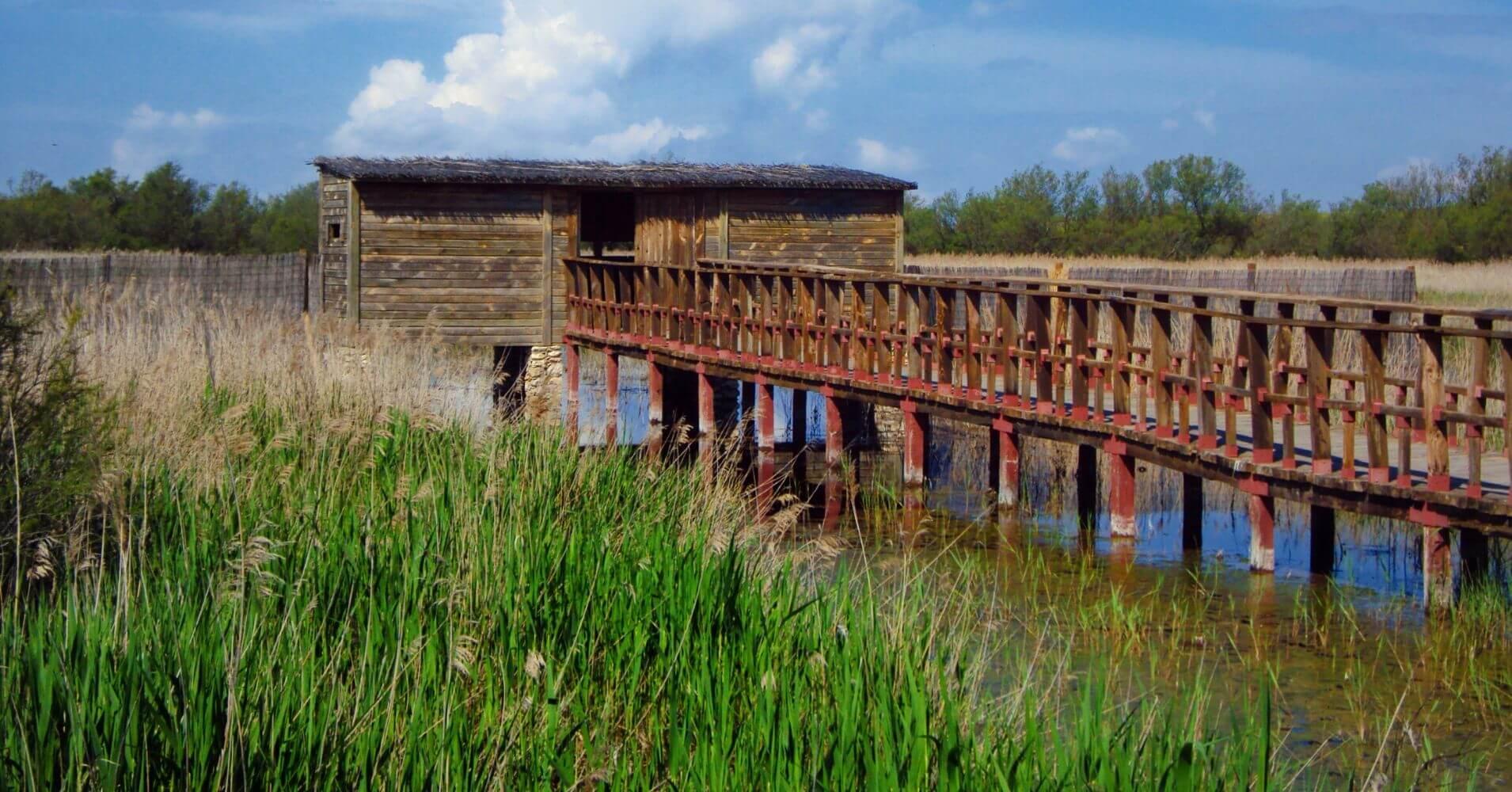 Pasarela del Parque Nacional de las Tablas de Daimiel. Ciudad Real, Castilla la Mancha.