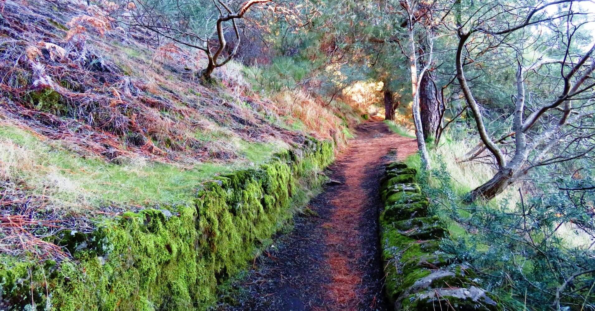 Sendero en el Parque Nacional de la Caldera de Taburiente. Isla de La Palma en Invierno. Islas Canarias.